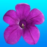 Virutla Reality(VR) Petunia Flower