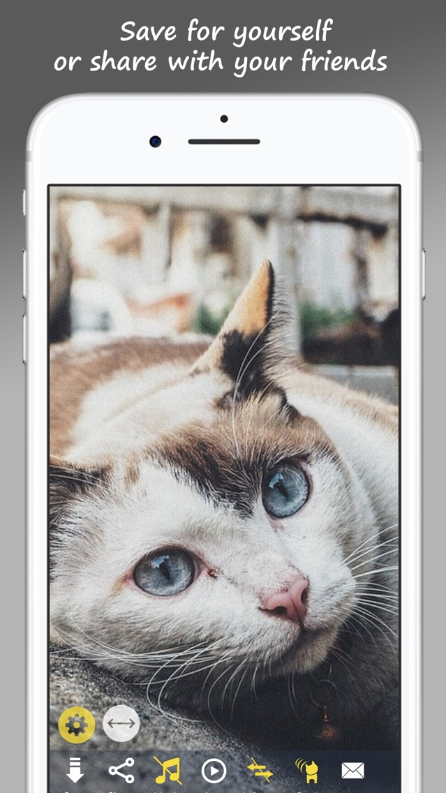 MeowPix: Relaxing Cat Slideshow with Music App for iPhone