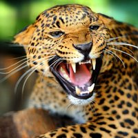 Animal Sounds : 140+ Amazing images and sounds of animals