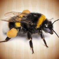 Ile pszczół. Kalkulator sadownika