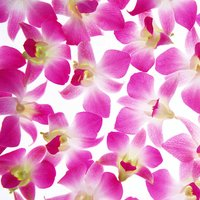 Floral Print Wallpapers