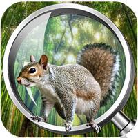 Forest Clue Hidden Object
