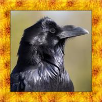 Raven Simulator