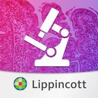 Histology: USMLE Q&A Review