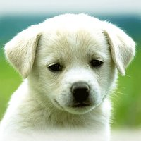 Cute Puppies Wallpapers  - dog pictures for free!