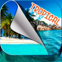 Tropical Island Wallpapers – Beautiful Summer Beach and Palm Trees Pictures