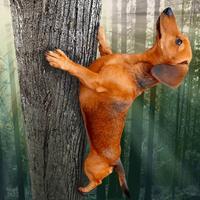 Wild Wiener!