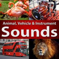 Animal Sounds - Learn Fun Play