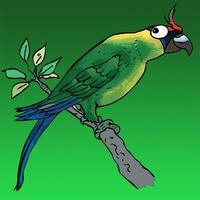 Les oiseaux du Caillou - NC