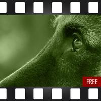 DogSocial Dog Training FREE - Teaching the Basic Commands