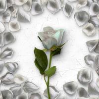 Flower Greetings White Roses