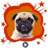 Handsome Pug Puppy Animated