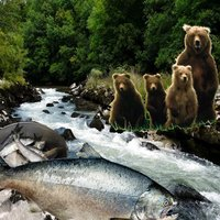Guzzling Grizzlies