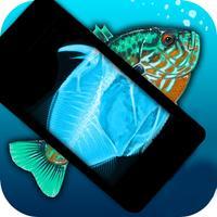 Simulator X-Ray Fish