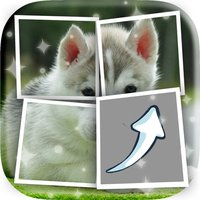 Puppies Picture Characters Quiz Games Pro