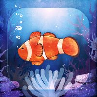 Clownfish Aquarium