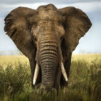 Elephant Simulator 3D Game