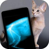 Simulator X-Ray Photo Cat