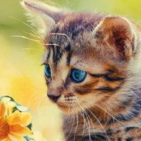 Cat Jigsaw Puzzles HD - Easy Jigsaw Puzzles Games for Kids Free