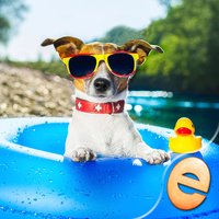 Jigsaw Wonder Puppies Puzzles for Kids Free