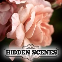 Hidden Scenes - Summer Roses