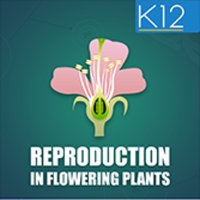Reproduction-Flowering Plants
