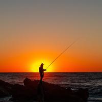 Fishing Organiser