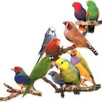 Birds Voice