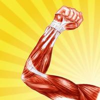 Human Muscle Encyclopedia Plus+