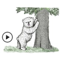 Animated Happy Bear Stickers