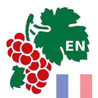 Wine Encyclopedia France