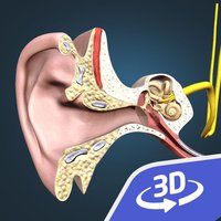 The mechanism of hearing 3D