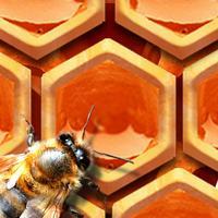 BeeHive!