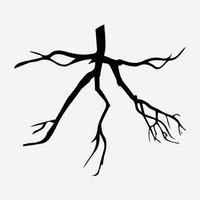 木 - Branch