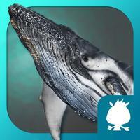 蓝鲸-袋鼠跳跳