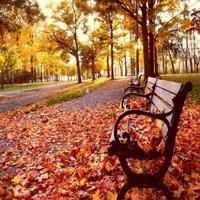 Autumn Wallpaper : Best Theme & LockScreens