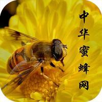 中华蜜蜂网