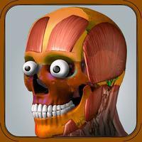 Human Anatomy 4D-Mixed Reality