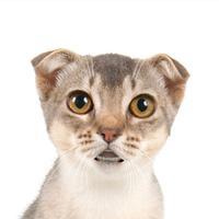 Talking Cat 2